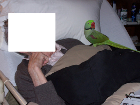 Chester, my Alexandrine Ringneck Parakeet, came with me to visit residents in a local nursing home.