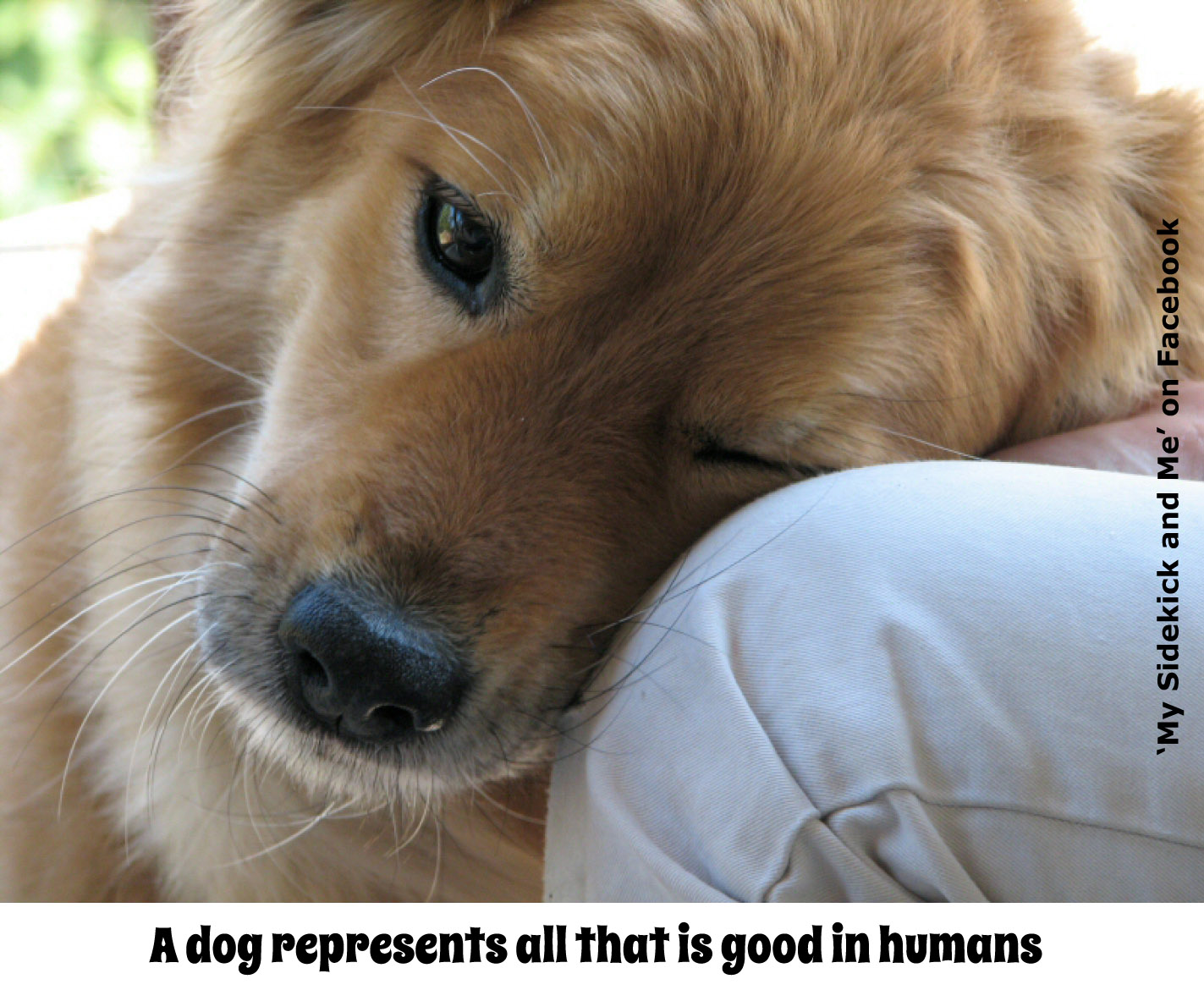 Dog Love Quotes Dog Quote  Good Things Going Around